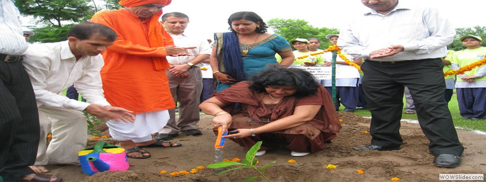 9 Tree-Plantation-in-School-C